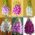 de alta calidad hermosa tailandia frescas flores cortadas de orquídeas