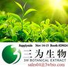 100% natural tea polyphenol catechin EGCG green tea extract