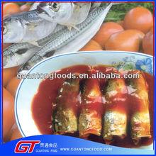 sea food canned mackerel fish in tomato suace