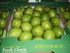 Fresh Lemon ( Adalia )