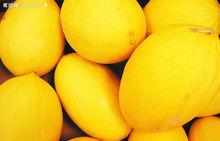 Planting hybrid musk melon seeds Golden sun