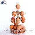 fio branco de coleta de ovos cesta