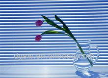 crystal window curtains