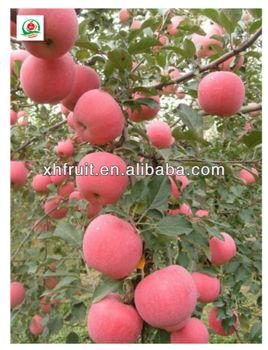 Good quality fuji apples