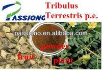 Best Tribulus Terrestris Extract 40%,90% Saponins