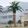 Preservada exteriores coqueiro artificial/grande outdoor árvores artificiais