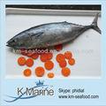 types de fruits de mer poissons thon bonite