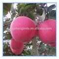 2014 roja fresca de frutas de manzana