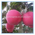 2014 Fresh Red Apple Fruit