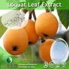 High Quality Loquat Leaf Powder Extract/Loquat Leaf P.E./Loquat Leaf Extract