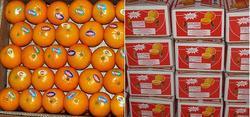 Fresh Mandarins/ Kinnow from Pakistan