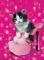 โปรโมชั่นที่มีคุณภาพดีการ์ตูน3dภาพแมว