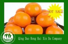 2013 chinese lokam orange/sweet lokam orange/lokam orange