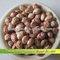 Gros nouvelle récolte tachetés légers haricots, Haute qualité haricots Xinjiang origine
