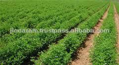 best supplier of guar gum powder churi korma from India