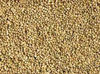 guar gum seeds from India