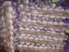Natural fresh garlic peeler importers price peeled garlic Shandong