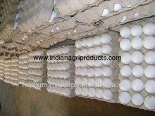 Granja de huevo fresco con precio