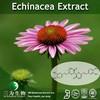 3W Echinacea Herb Extract, Echinacea Purpurea Extract 4% Polyphenols