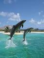 Animal en plastique 3d impression photo de dauphin. décorations