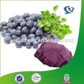 de alta calidad de extracto de la baya acai semillas