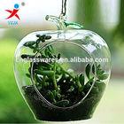 Lampblown glass vases manafacturer air plant glass terrarium
