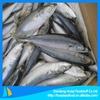 frozen pacific mackerel fish wholesale