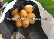 paper bag loquat protection