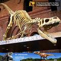 Mi Dino - fósil de dinosaurio, Esqueleto de animal para dinosaurio exposición