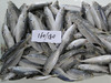 Frozen fish Frozen horse mackerel 160--180