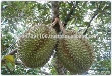 FRESH DURIAN THAILAND FRUIT SUPER DELICIOUS PREMIUM