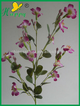 Winter flowers jasmine flower exporters
