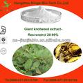 orgánico gigante knotweed extracto