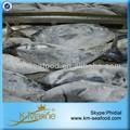 todos los tipos de mar de pescado congelado bonito