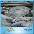 All Types of Sea Frozen Bonito Fish