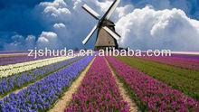 wholesale fashion 3d Hyacinthus pictures