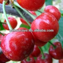 Acerola Extract 3% 17% 25% Natural Vitamin C