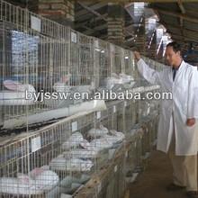 2 Story Rabbit Cage In Kenya Farm