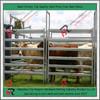 Pre-galvanized cattle yard panel