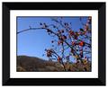 Negro marco de las ramas de la fruta bajo el cielo azul decorativa del cuadro