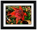 immergrünen Busch ein wenig rote blätter Bild dekorative schönen 3d