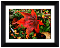 Evergreen bush a little red leaves picture decorative beautiful 3D