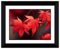 negro marco colorido hoja de arce imágenes moderna imagen decorativa