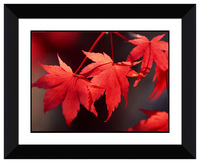 Black frame Colorful maple leaf images modern picture decorative