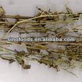 chuan xin lian andrographis herb medicina da erva natural herbal alívio do estresse