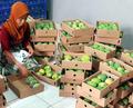 De primera calidad de la fruta del MANGO mejor precio