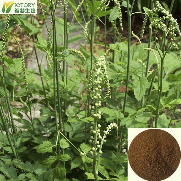 ISO certificate nature black cohosh extract