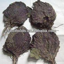Zi su ye Perilla leaf Folium Perillae Perilla leaves Natural herbs herbal extract