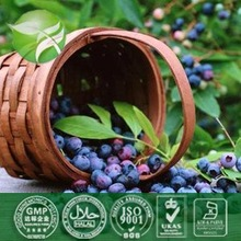 Blueberry plant extract with 25% Anthocyanidins or ratio extract