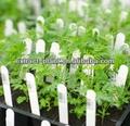 Natural Artemisinin extrato da planta em estoque